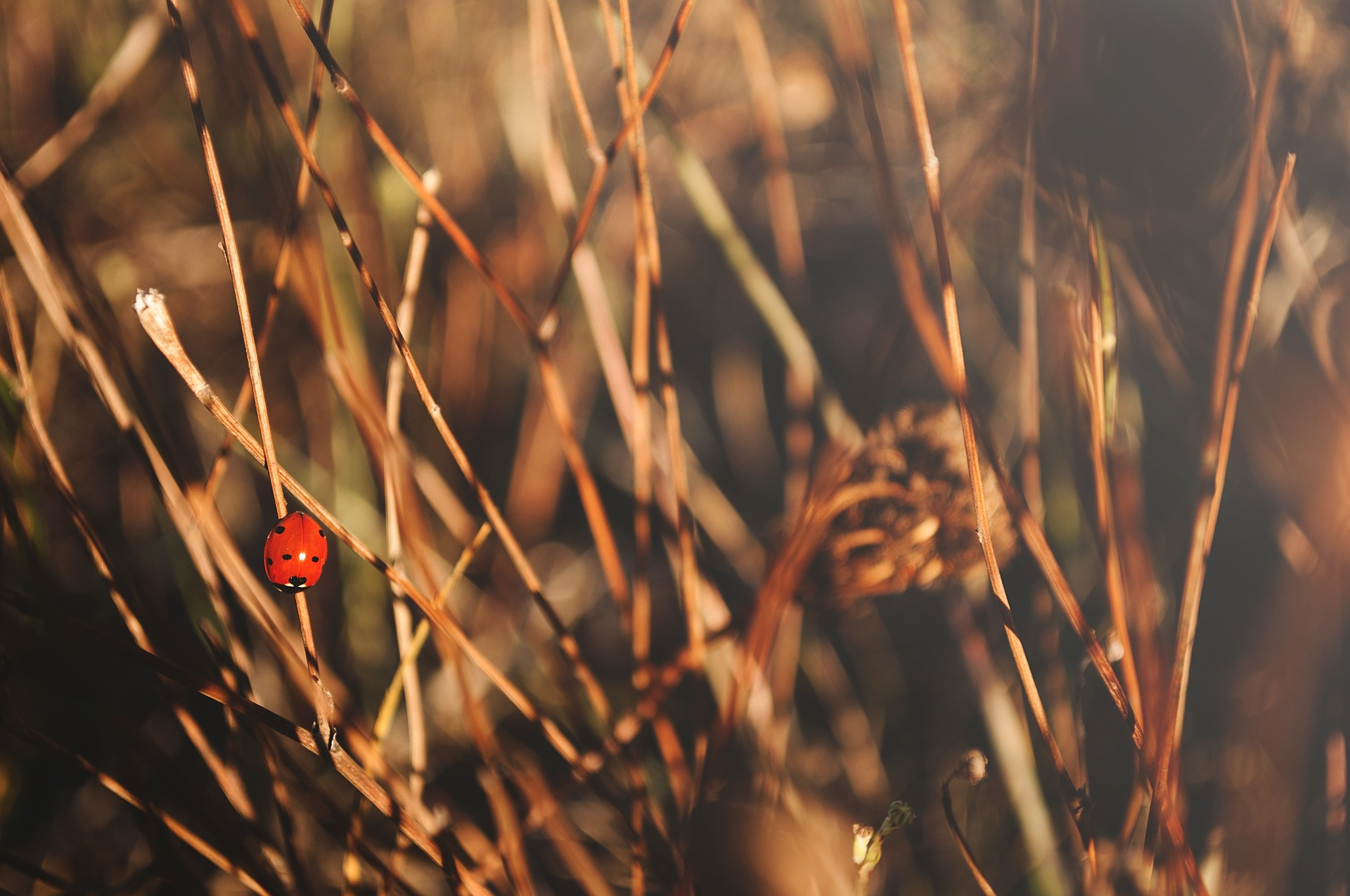 nature-1283369_1920